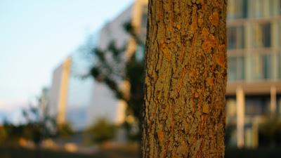 Meine Kamera & ich - Ein Herbst-Spaziergang